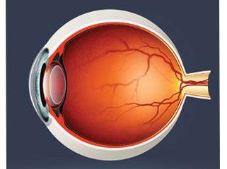 Retina Department